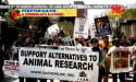 Torturing Animals in Research: Scientifically Invalid, Morally Repugnant