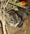 Las Chinchillas National Reserve: Chilean Paradise for Chinchillas (In Spanish)