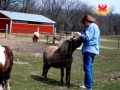 SASHA Farm: Largest Farm Animal Sanctuary in the US Heartland